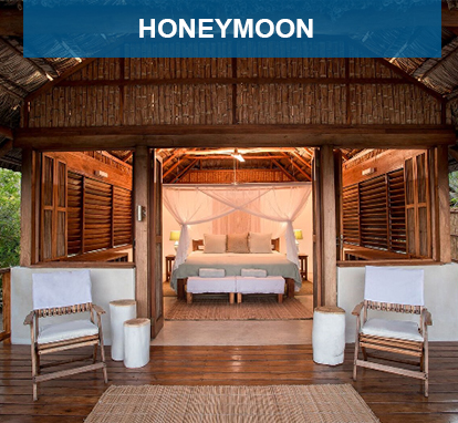 Honey Moon Specials
